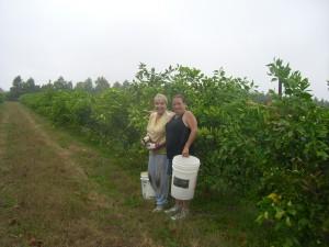 Monica & Rue Picking the first Homegrown Honeybells