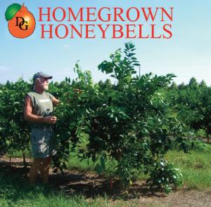 Homegrown Honeybells